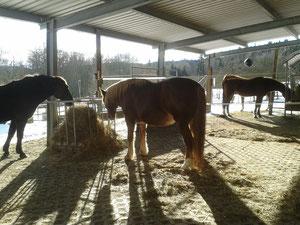 Der Pferdepensionsstall bietet großzügige Freiräume für jeden Einsteller.