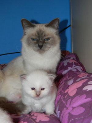 Queenie e Selly