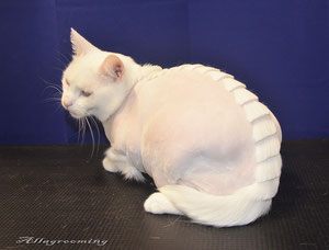 стрижка кошек саратов
