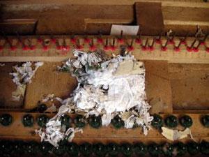 鍵盤の下にネズミの巣があった場合、アクションや色々な所をかじってしまうので、大修理になります。