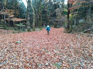 落ち葉の敷きつめられた道