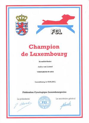 Andra Champions Urkunde