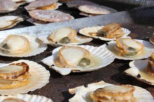 野田村の沖合いは、冷たい親潮と暖かい黒潮がぶつかり合っているため、ホタテのエサとなるプランクトンが豊富です。こうした環境で育った野田のホタテは大きく肉厚で、ほかのホタテとはひと味もふた味も違います。