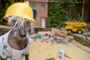 Chini Builder