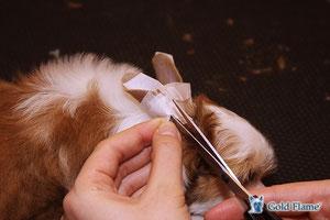 как ставить (клеить) ушки щенку
