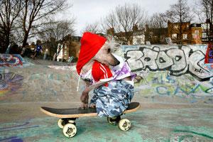 Chini Skate - Chini на скейте