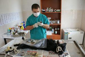 Tierarzt Hüseyin