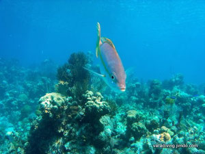 snorkeling the bay of pigs with varadiving
