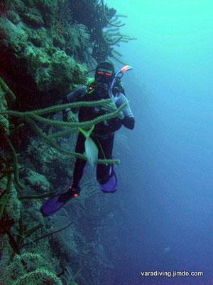 Bay of Pifs WAL DIVE