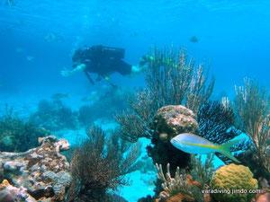 scuba diving trips in varadero cuba
