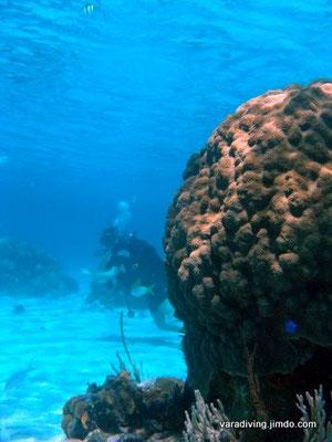 best diving trips in varadero