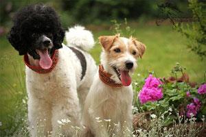 Duffi und Cookie unsere beiden Besten!