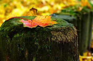 passend zum Herbst gibt´s auch bei mir schöne bunte Blätter