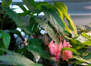 Pflanzen im Terrarium