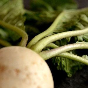 無農薬野菜 カブ