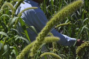 スリーエフ農法の無農薬野菜