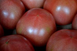 無農薬野菜 森田さん トマト