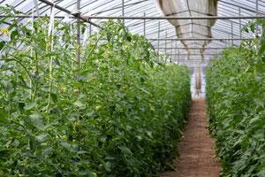 無農薬野菜 エコファーマー