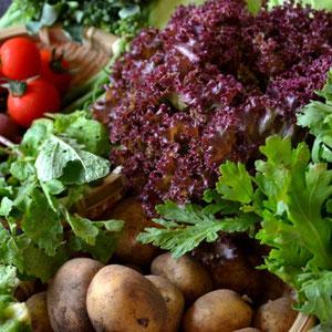 無農薬野菜 野菜セット