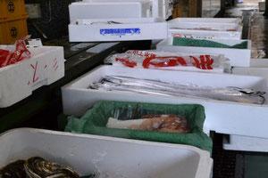 鮮魚卸 シーズ 三重