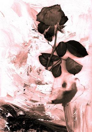 ...a rose... - ...eine Rose...