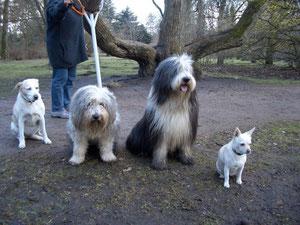 Dina, Leika, Felix, und Abby im Hamburger Stadtpark