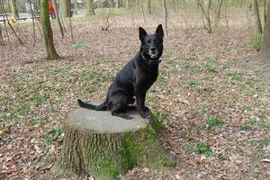 Sam im Hamburger Stadtpark