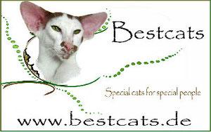Bestcats aus Hamburg