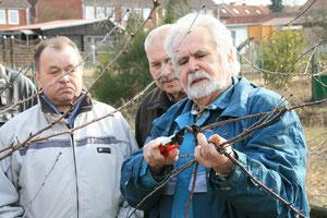 Aufmerksam beobachten die Gartenfreunde Ballin und Seifert Herrn Vogel beim Baumschnitt
