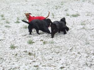 """Con gli """"amici"""" sulla neve."""