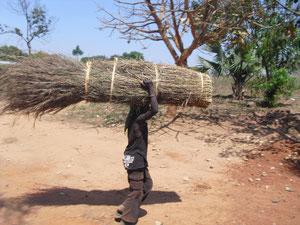 住居(土壁小屋)の屋根用干し葦を運ぶ少年