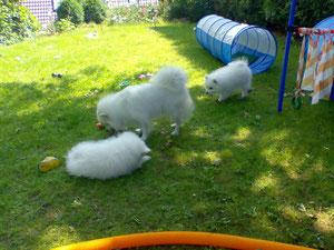 Quiana mit Bailey und Avaro