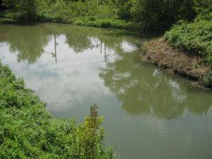 流通センター前の川です。大きな鯉もいます。