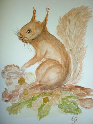 Eichhörnchen  2/2013