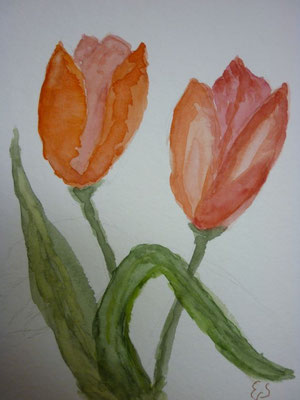 18.3.2013 Tulpen