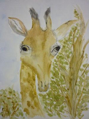 Giraffe 18.04.2013