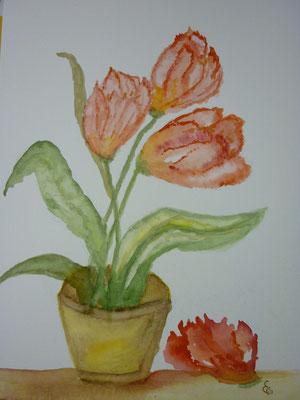Jan. 2012  Tulpen im Topf