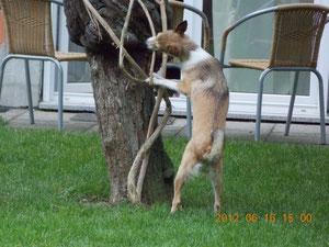 und beiße immer mal wieder in den Baum