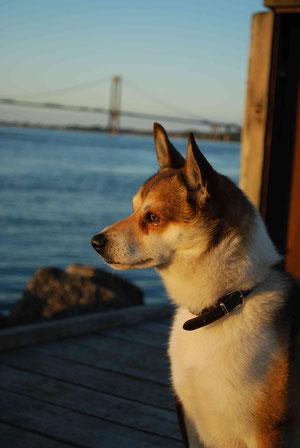 Clyde am Hafen (Bild: Christine Rachow)