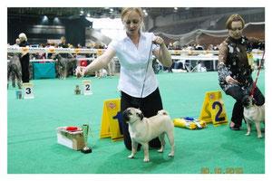 Ласти Лиана-класс щенков