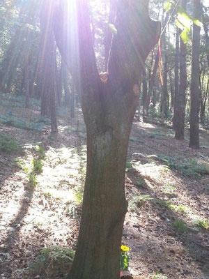 Der Sören-Baum in der Sonne