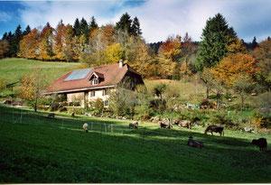 L'automne au Montois