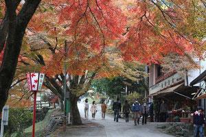 紅葉真っ盛りの養老公園へ・・・、モミジのグラディエーションが見事