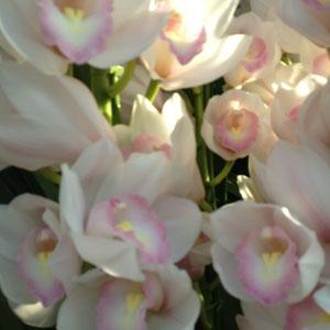 ハーブ園の蘭