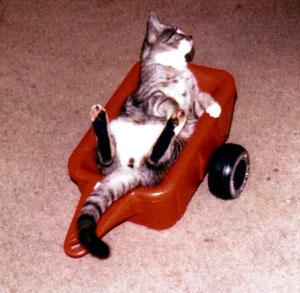 ...wir fahren auch kein Cabrio,...