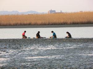 吉野川でカニの現存量調査中