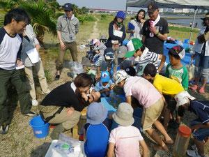 御前浜で環境学習(2011年大阪湾生き物一斉調査 アサリの浄化実験)