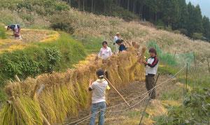 上勝棚田で御米収穫