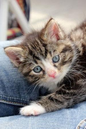 Kätzchen Müsli und die anderen Tiere vom Tierheim Emden bedanken sich bei den Puppenspölers für eine Spende von 400,- Euro