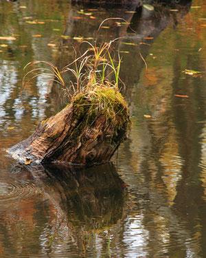 湖面の秋 H23.10.22 秋山郷